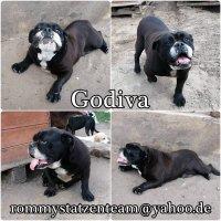 Godiva Collage