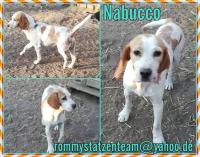 Nabucco Collage