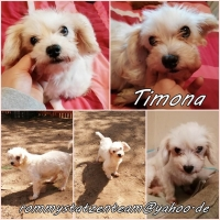 Timona Collage