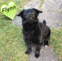 Flynn10