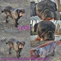 Aylin Collage