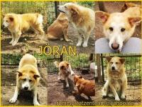 Jöran Collage