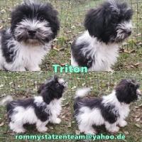 Triton Collage