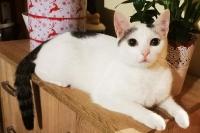 Lili Katze2