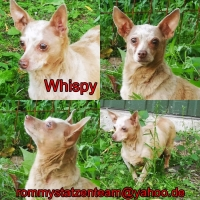 Whispy Collage