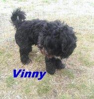 Vinny2