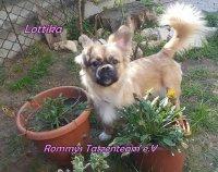 Lottika