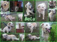 Balu neu Collage