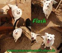 Flash Collage