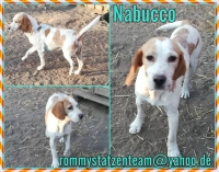 Nabucco Collage
