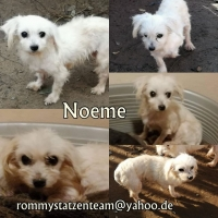 Noeme Collage