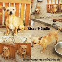 Ricca Collage